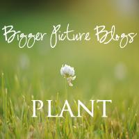 plant1 Bigger Picture Blogs